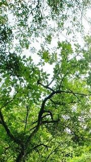 自然,空,屋外,緑,枝,葉っぱ,山,樹木,森林浴,草木