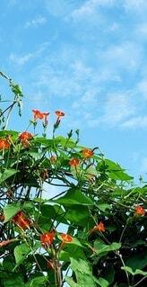 自然,空,花,屋外,きれい,青空,葉っぱ,オレンジ,森林浴,草木
