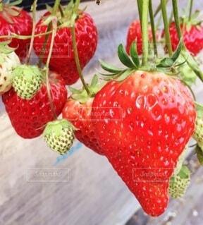 食べ物,赤,いちご,果物,野菜,甘い,ベリー,美味しい,イチゴ,イチゴ狩り
