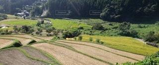 自然,風景,屋外,棚田,山,景色,草,樹木,田んぼ,草木,ファーム,田園地帯,プランテーション