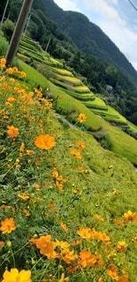 自然,花,屋外,緑,棚田,山,草,田んぼ,草木,田園地帯