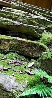 自然,屋外,階段,葉,草,苔,岩,爬虫類,草木