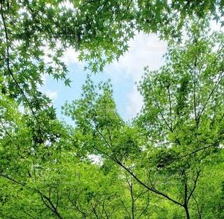 自然,空,秋,紅葉,屋外,青空,葉っぱ,木々,樹木,蝶々,森林浴,草木,秋の空,青々