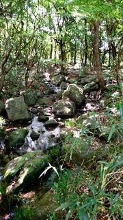 森林,屋外,水面,小川,滝,草,樹木,草木,ガーデン,非血管陸上植物