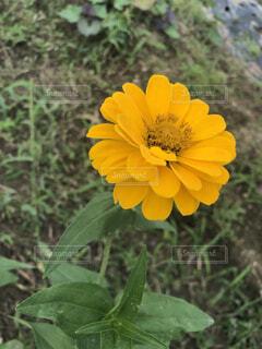 花,屋外,かわいい,黄色,景色,樹木,可愛い,フローラ,庭のお花