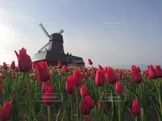 空,花,春,屋外,赤,風車