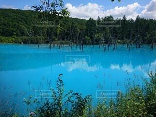 自然,風景,空,屋外,湖,水面,池,樹木