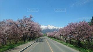 風景,空,花,春,雪,屋外,道路,山,樹木,道