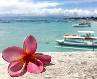 空,花,屋外,ビーチ,水面,常夏