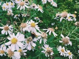 花,秋,庭,屋外,緑,季節,虫,ハチ,草木