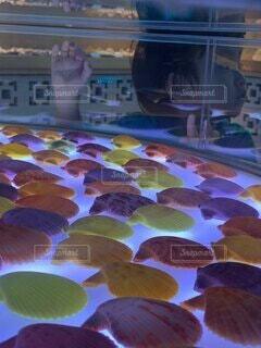 子ども,海,夏,貝殻,沖縄,子供,貝,男の子,2歳,古宇利島,博物館,シェル,オーシャンタワー