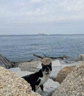 猫,海,空,動物,屋外,曇り,水面,岩,野良猫