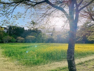 自然,風景,空,屋外,景色,草,樹木