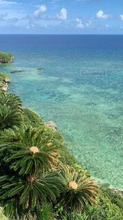 自然,海,夏,屋外,南国,ビーチ,島,水面,葉,海岸,沖縄,旅行,ヤシの木,グラデーション,ソテツ