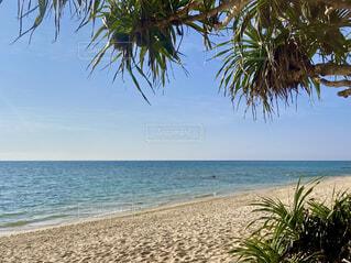 自然,風景,海,空,屋外,砂,ビーチ,水面,海岸,樹木,ヤシの木,パーム,熱帯