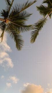 海,空,屋外,ビーチ,雲,樹木,ヤシの木,ハワイ,草木,パーム,ヤシ目