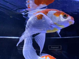動物,魚,水族館,葉,容器,金魚,金魚鉢