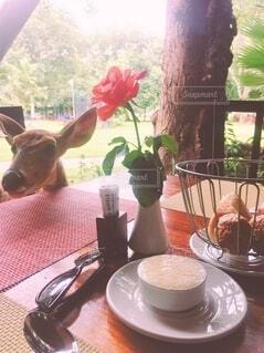 カフェ,自然,花,動物,サングラス,花瓶,光,旅行,プレッシャー,インパラ,アフリカの休日