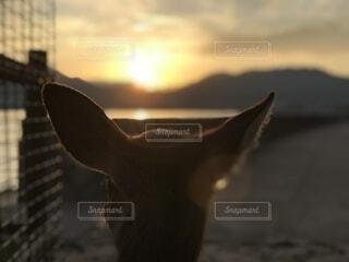 太陽,夕暮れ,景色,鹿,見つめる