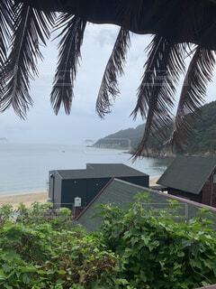 風景,海,屋外,景色,樹木,新緑,旅行,台風前