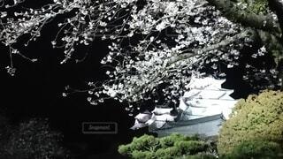 姫路城、桜、夜桜、ライトアップ、散歩