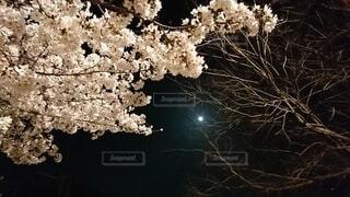 自然,風景,空,花,月