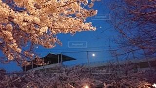 自然,風景,空,月,さくら、夜、月
