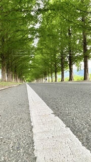 屋外,樹木,道,新緑,並木,イチョウ,歩道,地面,草木,路面,パス