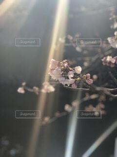 自然,風景,花,太陽,景色,逆光,ブロッサム