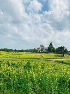 自然,風景,空,花,屋外,緑,雲,景色,草,樹木,草木