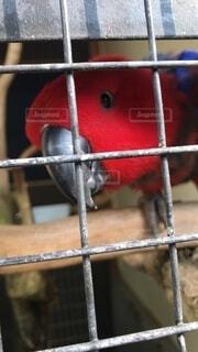 動物,鳥,赤,窓,金属,ケージ,オウム,ワイヤー,腰掛け