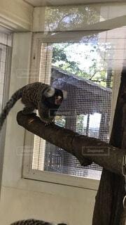 猫,動物,屋内,窓,動物園