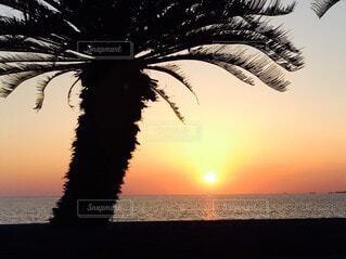 海,空,屋外,太陽,ビーチ,夕暮れ,水面,樹木,ヤシの木,草木,パーム
