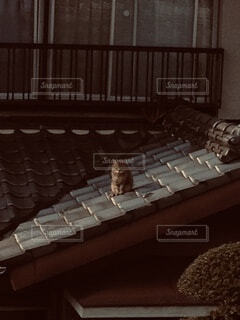 向かいの家の屋根に登ってこちらを向いているキッちゃんの写真・画像素材[4794569]