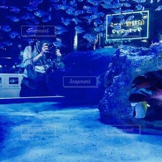 ライトとディープなブルーが綺麗な水中で泳ぐ魚の写真・画像素材[4901696]