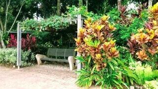 公園,花,屋外,南国,ベンチ,椅子,樹木,休憩,地面,観葉植物,マレーシア,リゾート,お散歩,クアラルンプール,草木,パーク,ガーデン