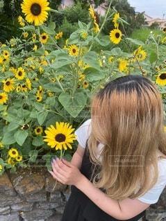 花,夏,屋外,ひまわり,黄色,人物,人,ひまわり畑,草木,パーソン