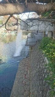 屋外,湖,川,水面,樹木,運河