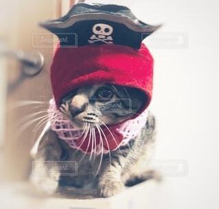 猫,動物,屋内,帽子,着衣