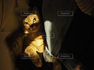 猫,動物,屋内,ペット,子猫,かくれんぼ,光と影,クローゼット,飼い猫