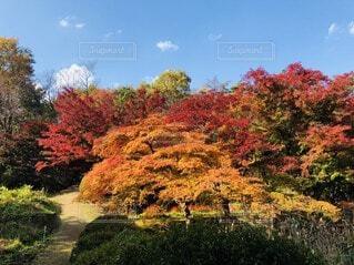 風景,空,秋,絶景,紅葉,屋外,緑,赤,黄色,オレンジ,樹木