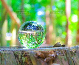自然,森林,切り株,水晶,水晶玉
