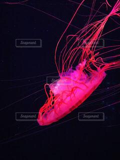 海,夏,動物,魚,水族館,水中,クラゲ,生き物,涼,すみだ水族館