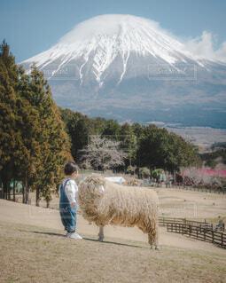 空,動物,富士山,雪,屋外,羊,牧場,山,子供,樹木,赤ちゃん,男の子