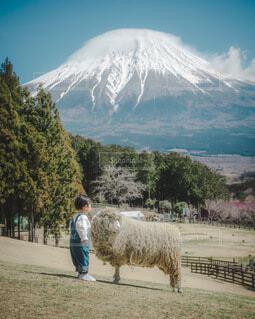 自然,風景,海,空,動物,富士山,雪,屋外,砂,ビーチ,羊,水面,海岸,牧場,山,子供,樹木,人物,人,立つ,地面,高原,男の子