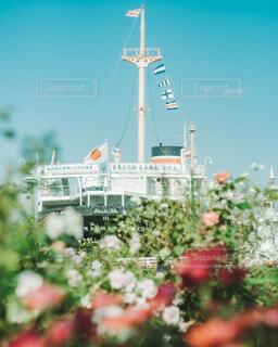 薔薇と氷川丸の写真・画像素材[4932232]