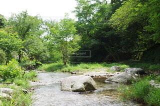 自然,屋外,湖,川,水面,水辺,草,樹木,運河,草木