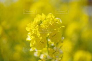 花,黄色,草木,ブルーム,フローラ