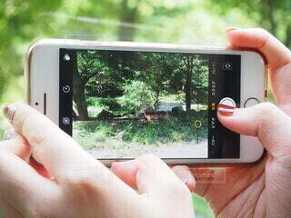 動物,太陽,手,景色,樹木,人物,人,動物園,携帯電話,エレクトロニクス,持株,スクリーン ショット