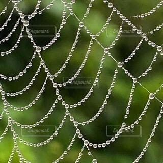 アクセサリー,蜘蛛の巣,シャンデリア,ネックレス,雫,素敵,朝露,景観,たからもの,神の目